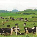 Chi tiết giá các sản phẩm chăn nuôi năm 2021